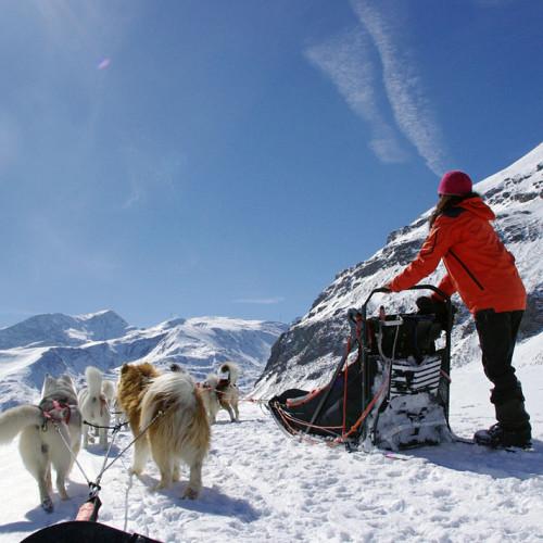 Activité de chiens de traineaux à Val Cenis